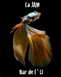 contemplez-la-grace-sublime-des-poissons-combattants-a-travers-leur-danse-envoutante3